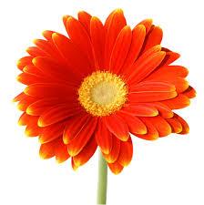 flores nat13