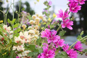 flores Auto Relajación Consciente
